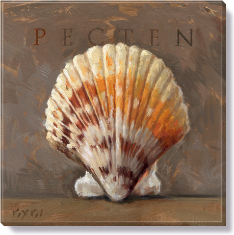 pecten canvas art print