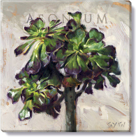aeonium succulant canvas wall art