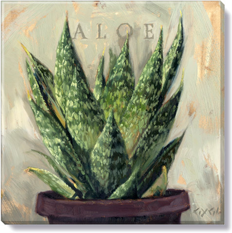 aloe canvas art print