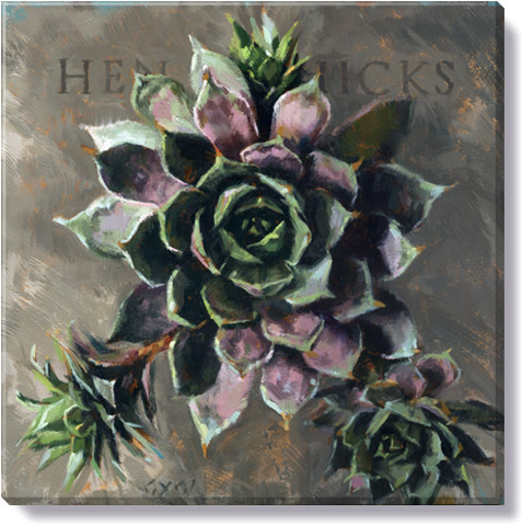 hen & chicks plants art print