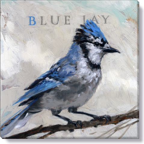 blue jay canvas art print