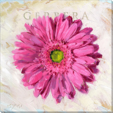 bright pink gerbera daisy canvas prints