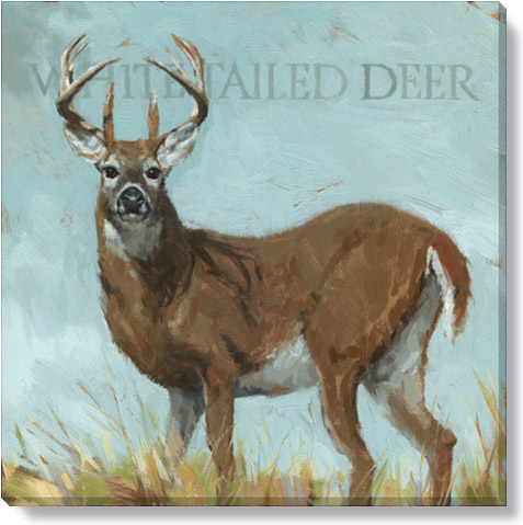 white tailed deer art print
