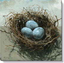 robin eggs birds nest canvas print