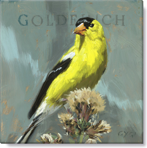 gold finch bird art print