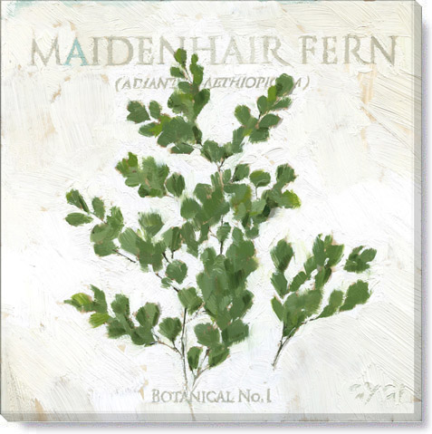 maidenhair fern canvas art print