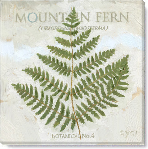 mountain fern giclee art print