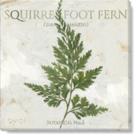 squirrel foot fern art print