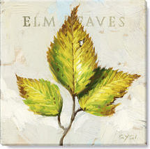 Elm leaves giclee print