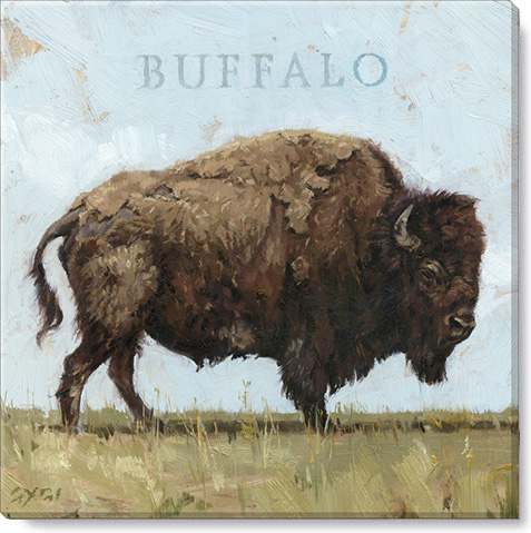 buffalo gallery wrapped giclee print