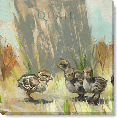 quail chicks canvas art print