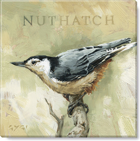 Nuthatch Bird Canvas Art Print
