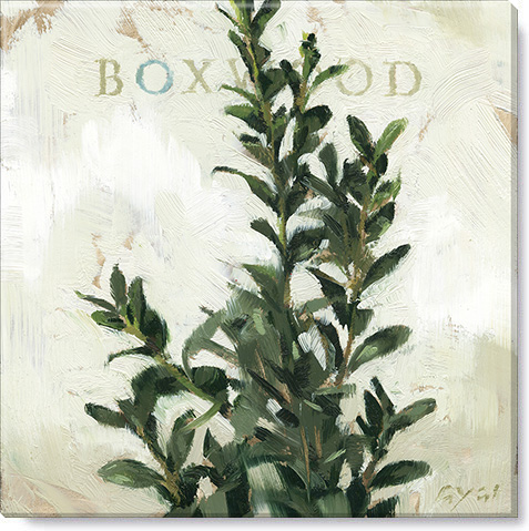 boxwood canvas art print