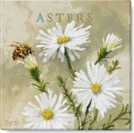 Asters canvas art print