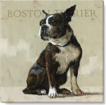 134-BostonTerrier